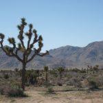 USA West Coast Road trip – Part 2: Joshua Tree National Park, Tucson, Flagstaff, Grand Canyon